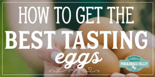 What To Feed Chickens To Get The Best Tasting Eggs 3