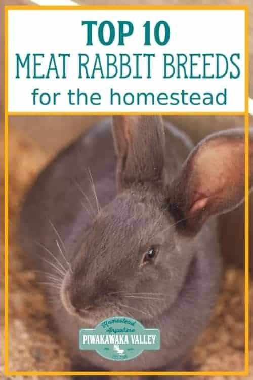 best meat rabbit breeds