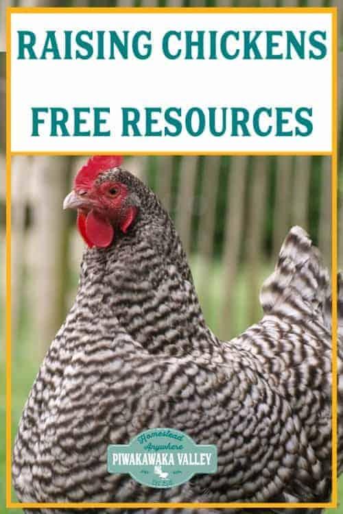 Raising chicken in your backyard