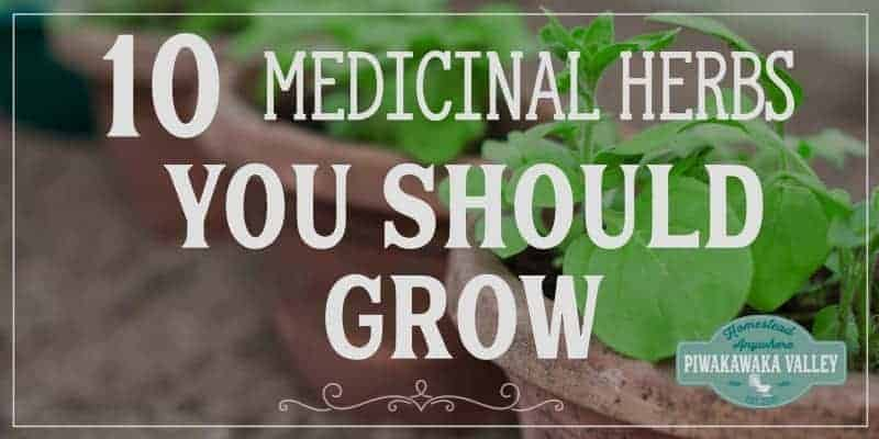 10 medicinal herbs and their uses