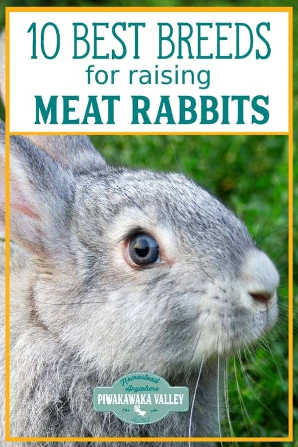 10 best rabbit breeds