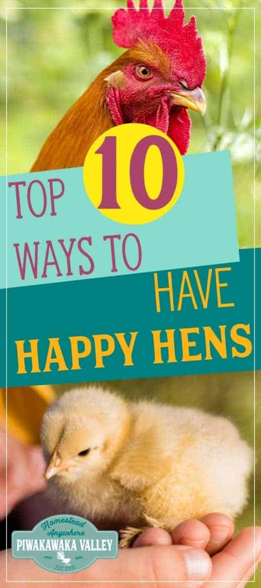 10 Top Tips On How To Make Chickens Happy 2
