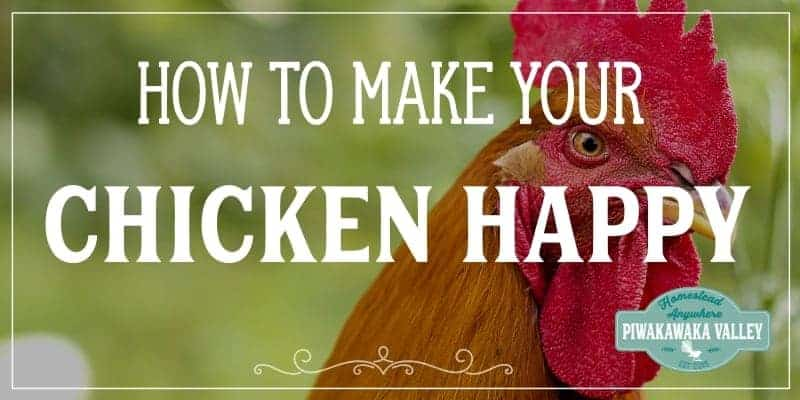 10 Top Tips On How To Make Chickens Happy