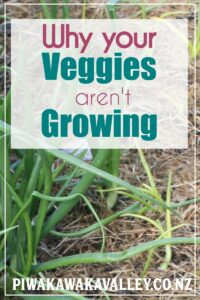 why my vegetables are not growing