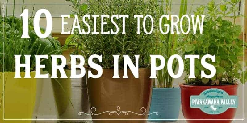 The 10 Easiest Herbs to Grow in a Pot promo image