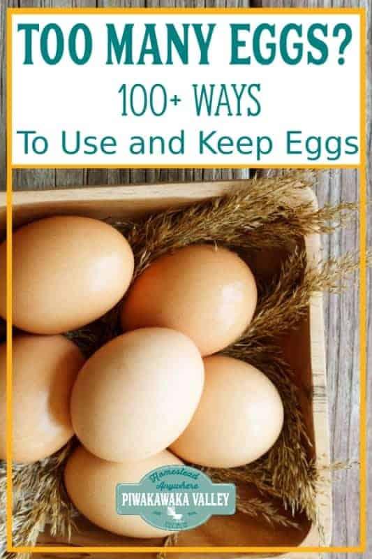 abundance of eggs