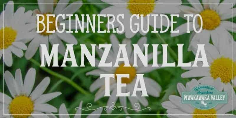 Manzanilla tea has many benefits. Also known as chamomile, this plant grows well in herb gardens and is a great medicinal herb to add to your natural medicine first aid kit. Grow this plant in your backyard today