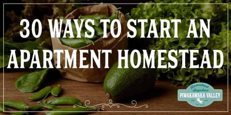 apartment homesteading