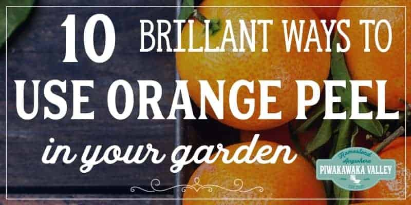 How to use orange peels in the garden