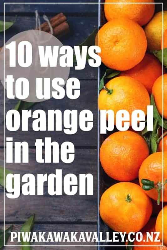 Orange Peel Fertilizer and 10 Brilliant Ways to Use Orange Peels in the Garden promo image