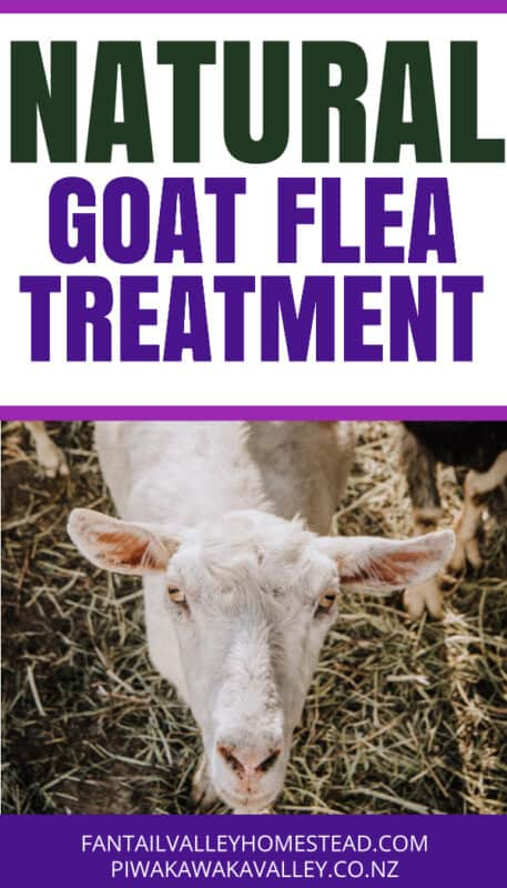 How to Control Mites, Fleas and Ticks Effective Natural Remedies for Goats, Chickens and other Animals promo image
