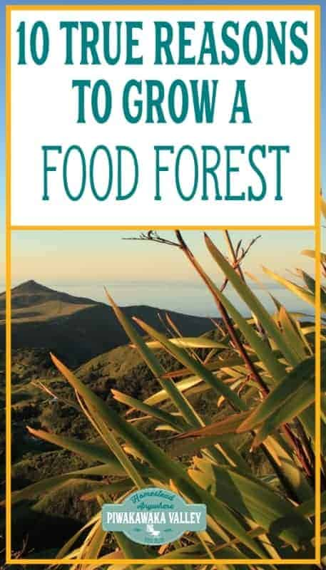 10 Reasons you Should Grow an Edible Food Forest Garden promo image