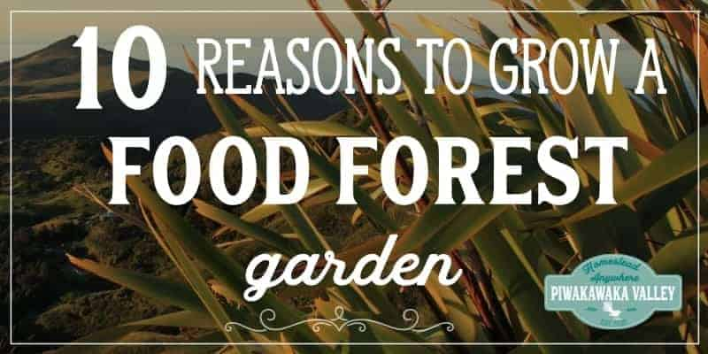 reasons to grow a food forest promo image