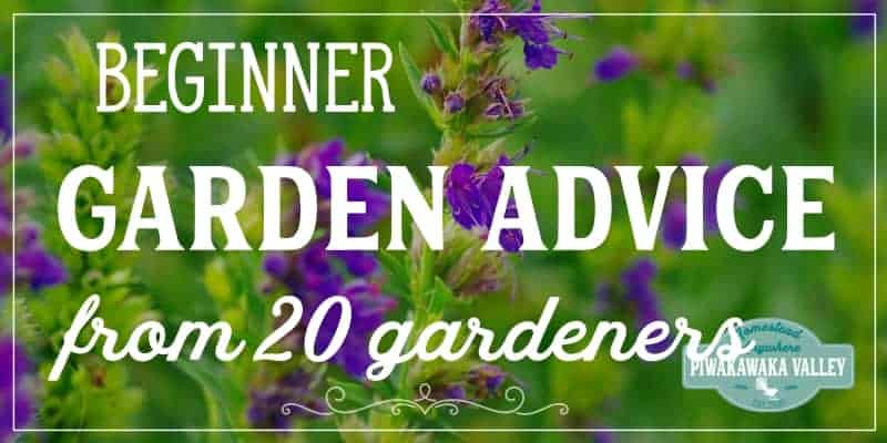 Beginner Gardening Advice from 20 Successful Gardeners: Tips they wish they knew when they started promo image