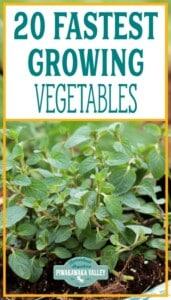 fastest growing vegetables promo image