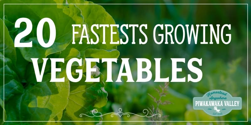 20 Fastest growing vegetables to get you a harvest the quickest promo image
