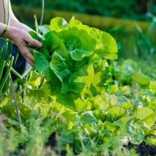 The Productive Gardener eCourse NORTHERN HEMISPHERE promo image
