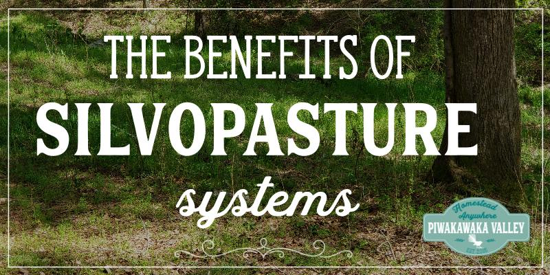 Silvopasture Benefits: Is silvopasture right for your homestead? promo image