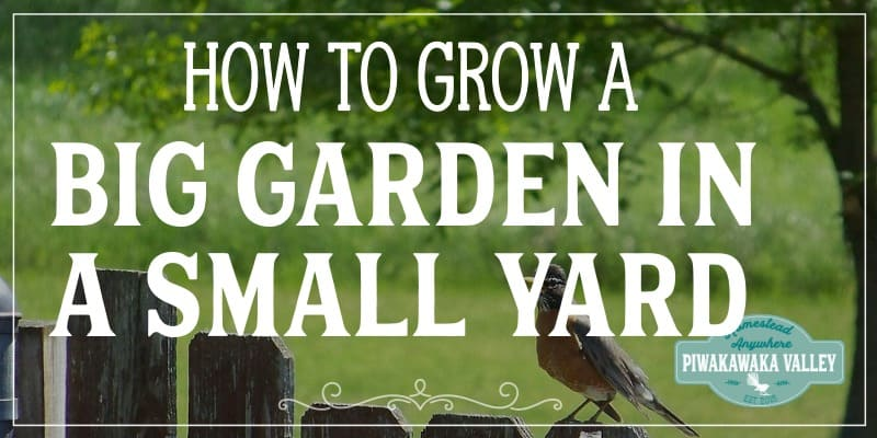 Urban self-sufficiency: How to grow a self sufficient garden in a small yard promo image