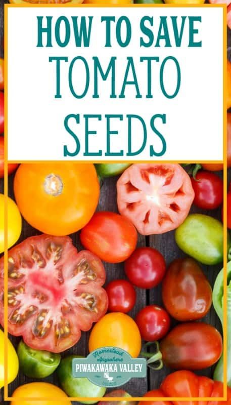 How to save tomato seeds for future planting (with video) promo image