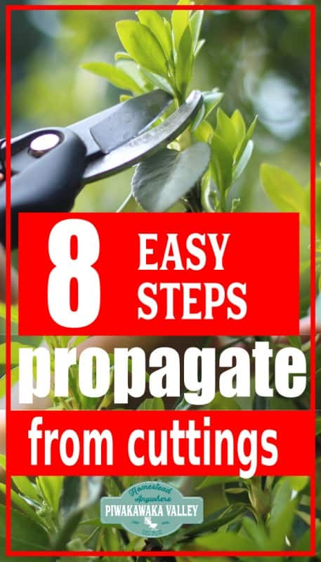 How to propagate trees and shrubs easily for beginners (including a video) promo image