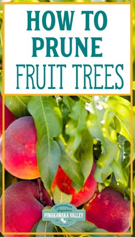 how to prune fruit trees in winter