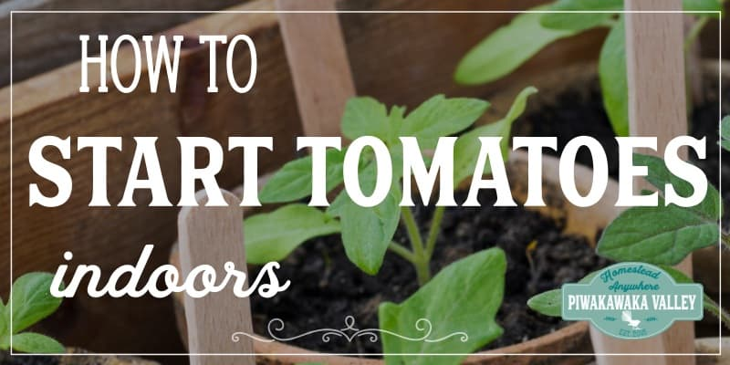How to start tomatoes indoors (with video) promo image