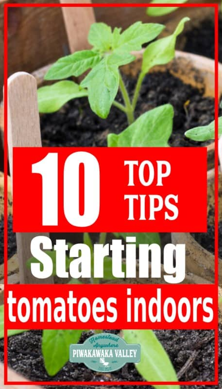 how to start tomatoes indoors