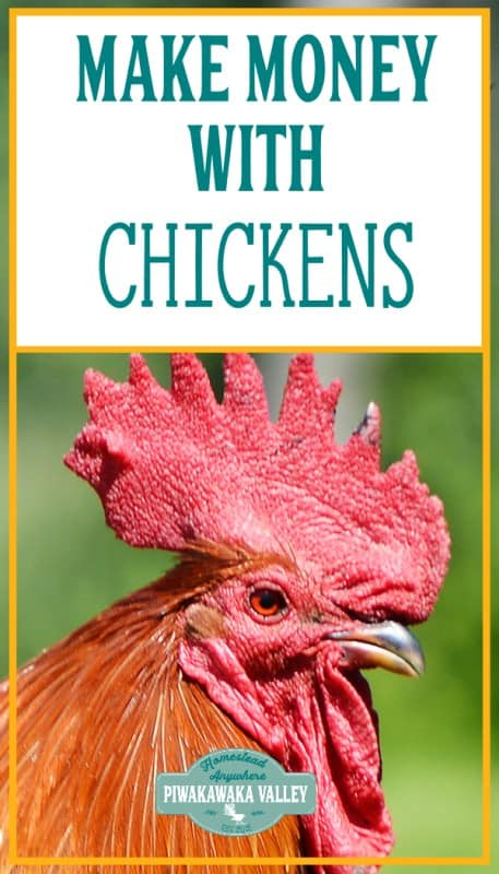 How to make money with chickens - what we do that works promo image