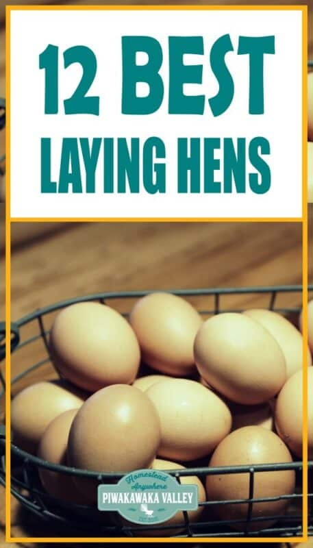There are so many chickens available and trying to choose the best backyard laying chickens for your situation can be an overwhelming task. I trust these recommendations have helped you make a decision for what <a href=