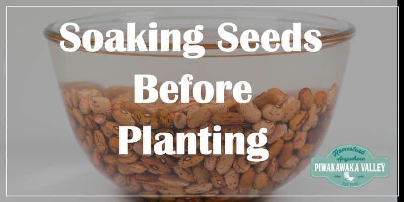 Soaking seeds before planting promo image