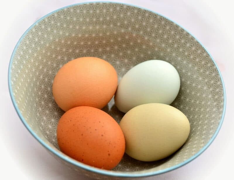 12 Best egg laying chickens for your backyard promo image