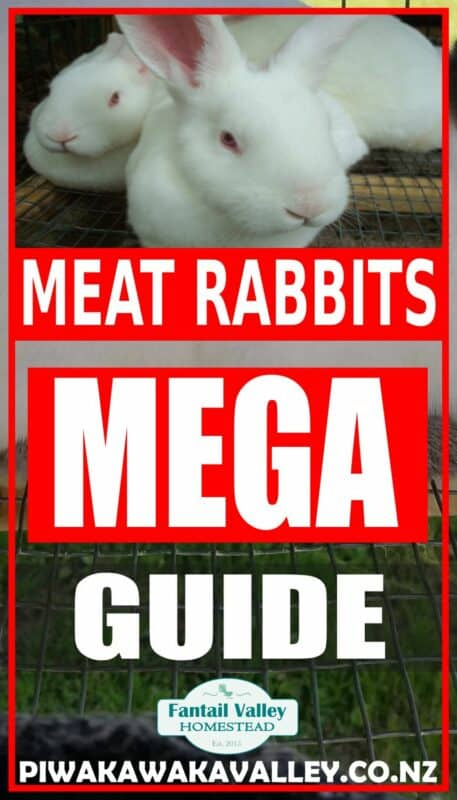Raising rabbits for meat in your backyard promo image