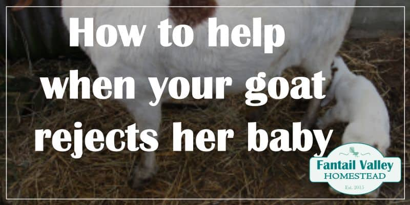Mother goat not recognizing baby goat | What to do when a doe rejects her kids promo image