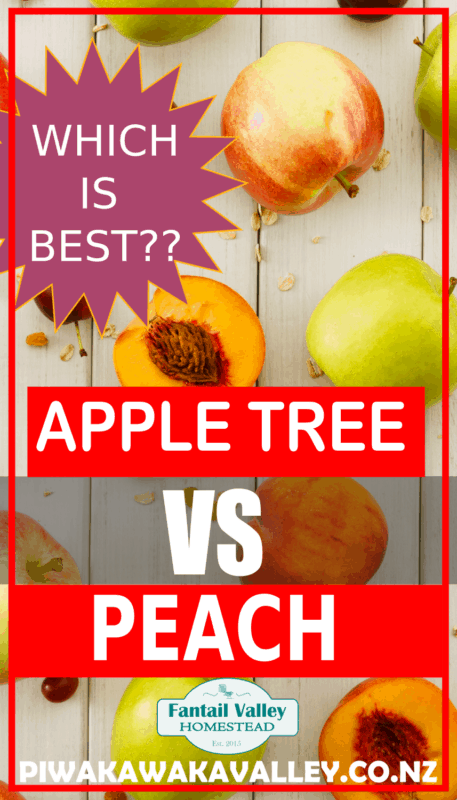Are apple trees better to plant, or peach trees promo image