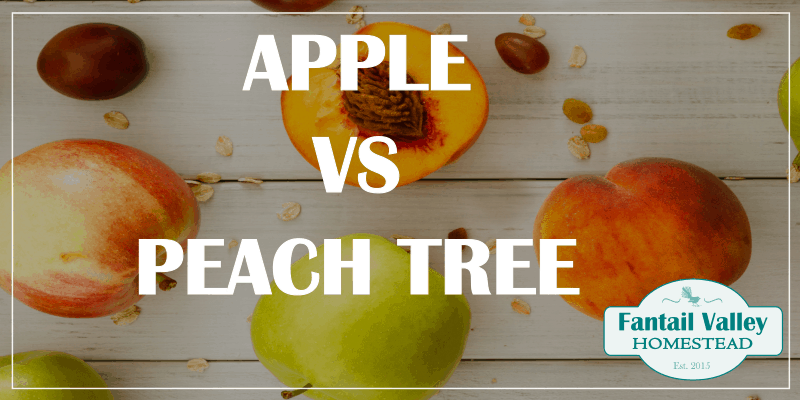 Are apple trees better to plant, or peach trees? promo image